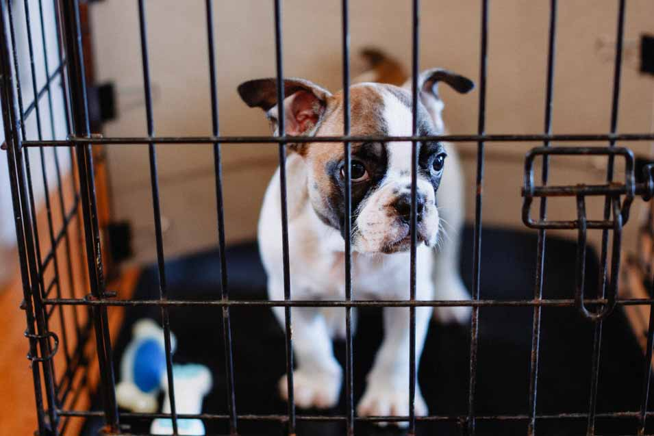 Teach dog to love its crate