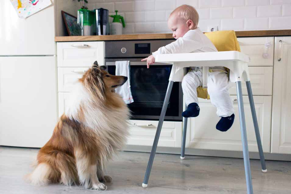 Picture of a Collie and a baby in a high chair