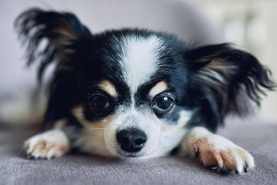Symptoms of Dog Diarrhea