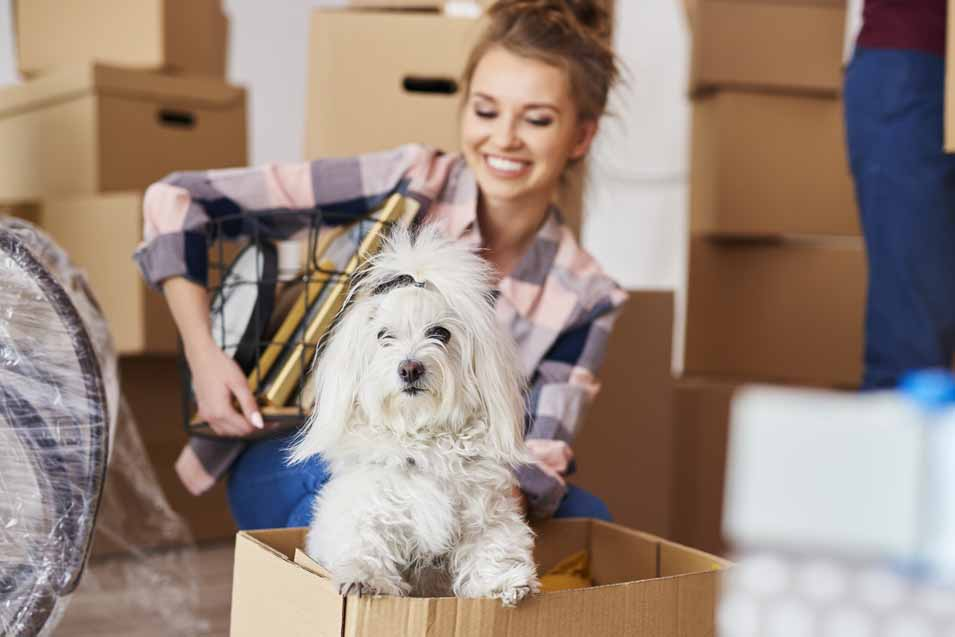 Moving dog into the home
