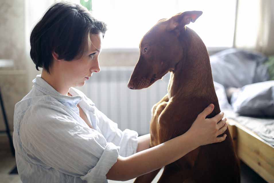 Picture a Pharaoh Hound and woman