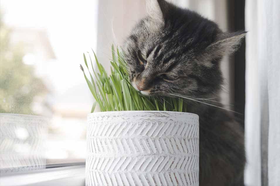 Harvesting Catnip