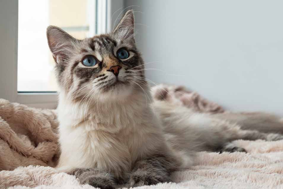 Picture of a young cat