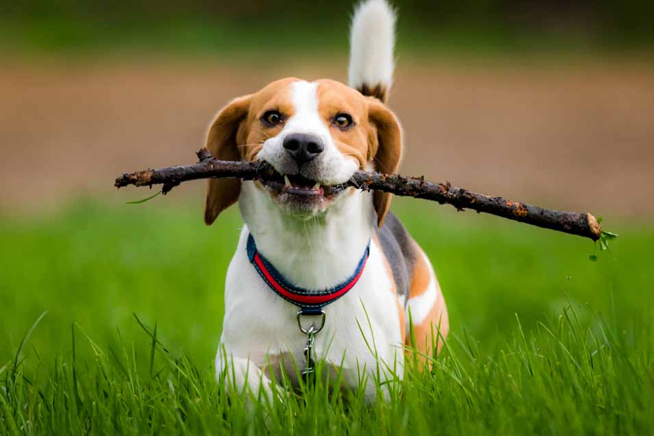Concerns with sticks and dogs