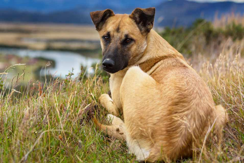 Preventing Breast Cancer in Dogs
