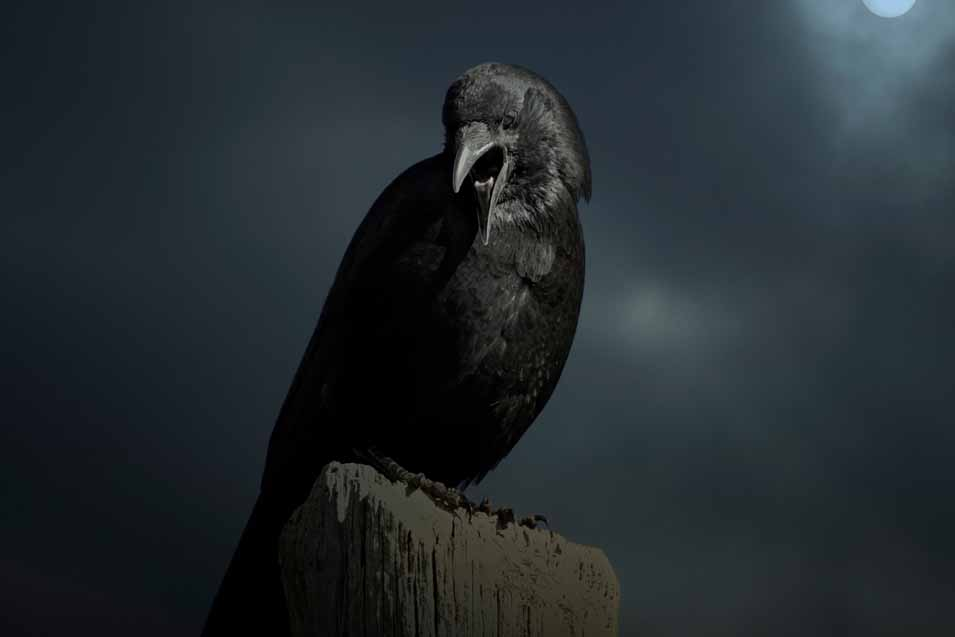 Picture of a crow at night