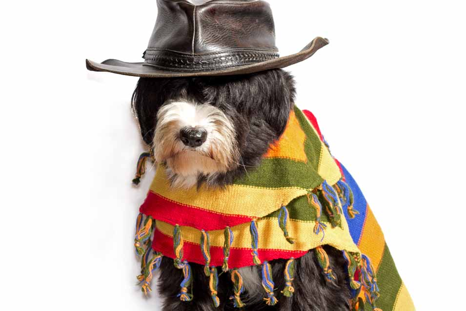 Dog dressed in Mexican Clothing