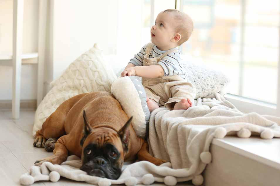 Picture of a boy and a boxer dog