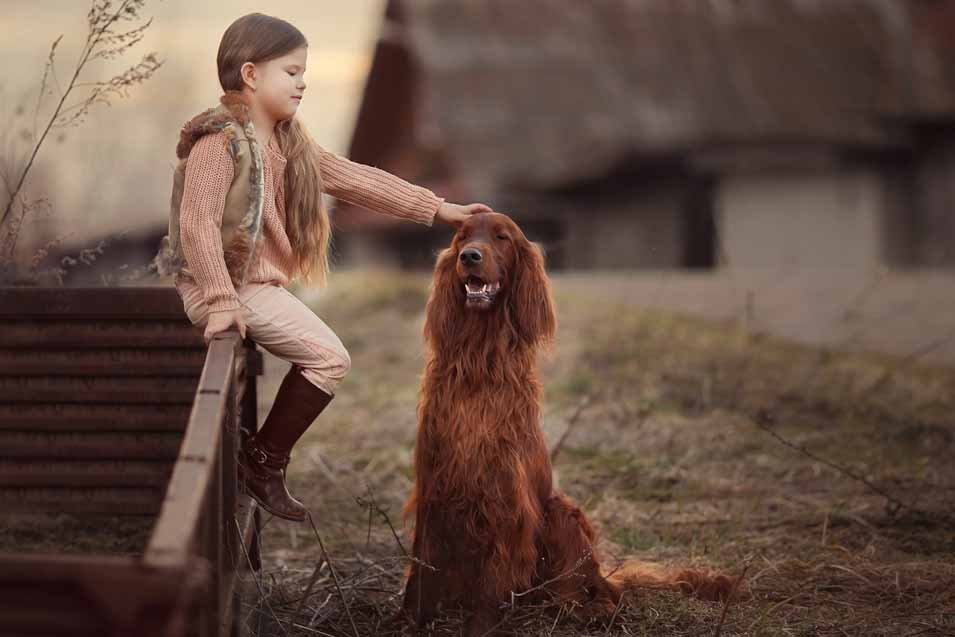 Picture of an Irish Setter and a girl