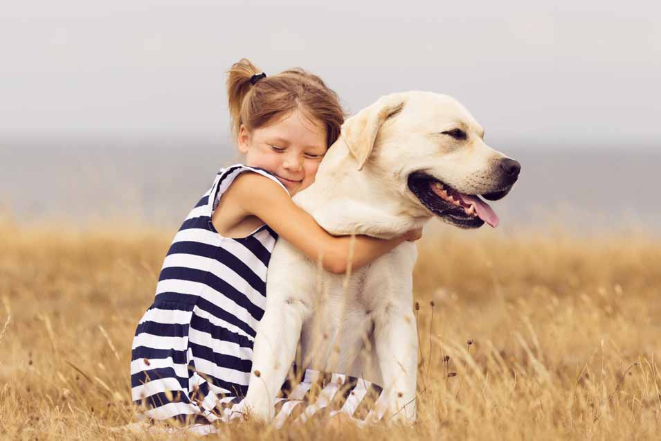 Picture of a Labrador Retriever and girl in a field