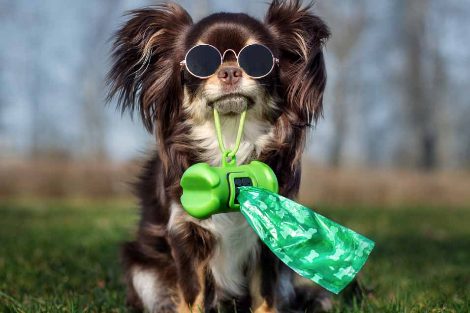 Picture of a dog holding poop bags