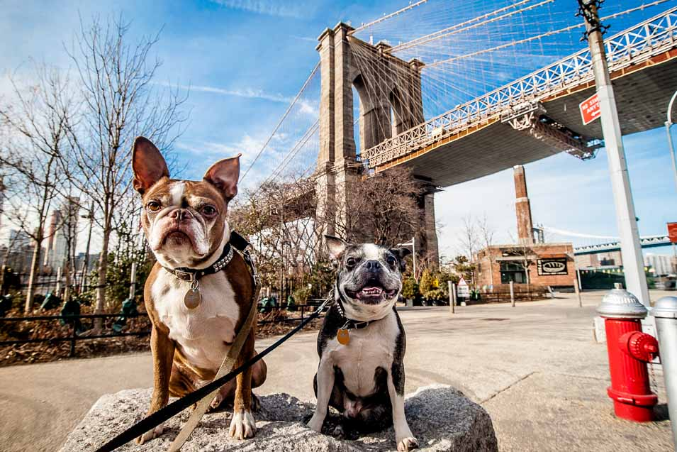 Picture of dogs in New York