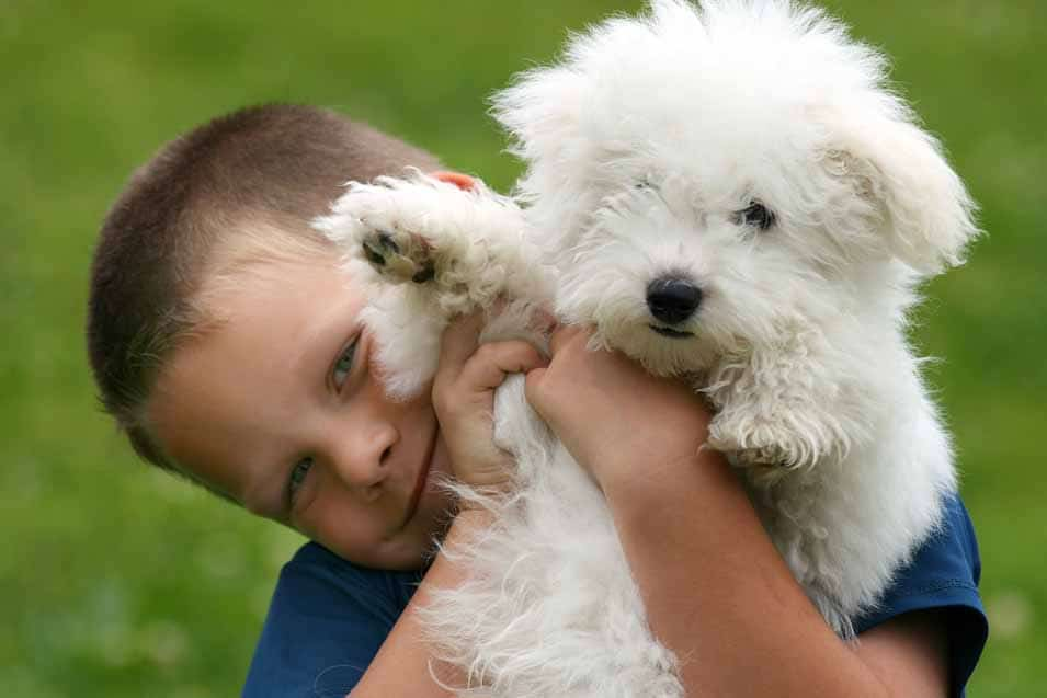 Picture of a boy and a Bichon Frise
