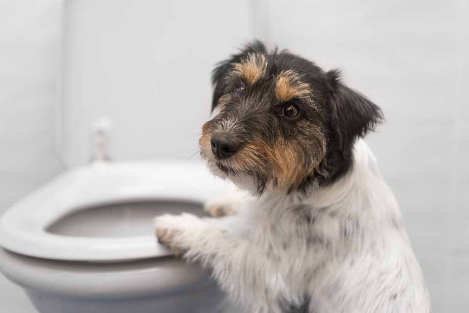 Picture of a dog in the bathroom