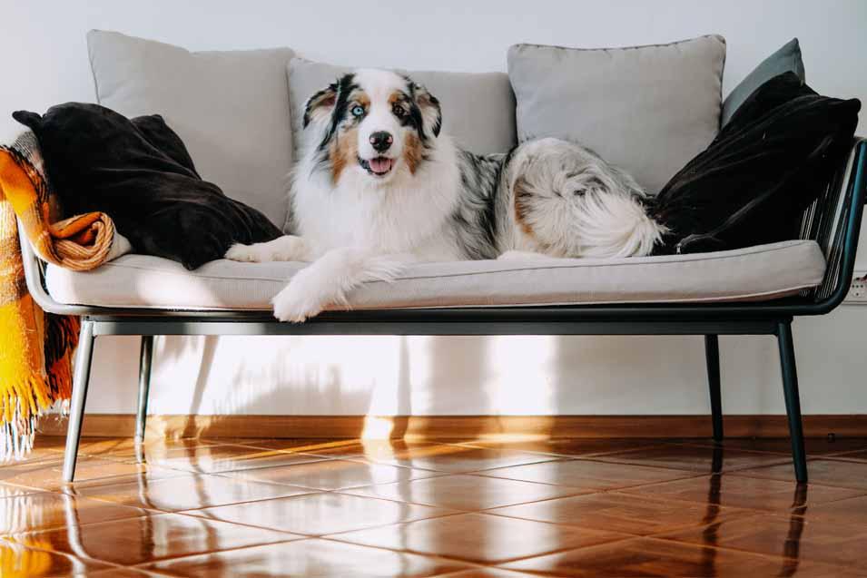 dog laying on sofa