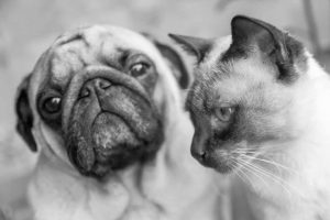 picture of a dog and cat