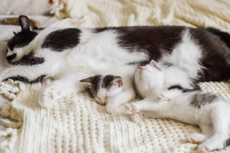 free feeding kittens