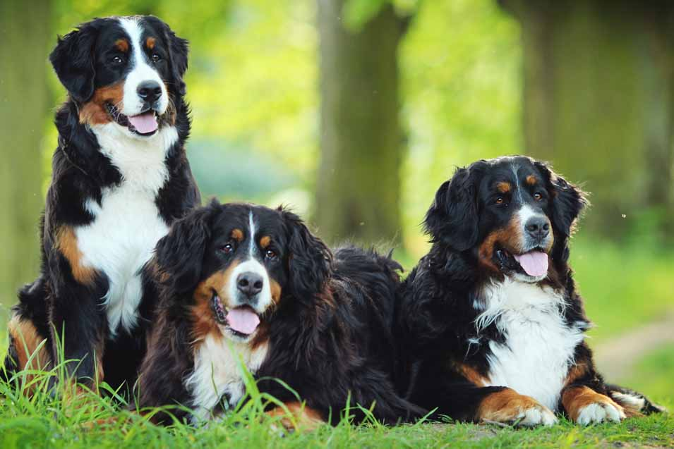 Dog reproduction issues