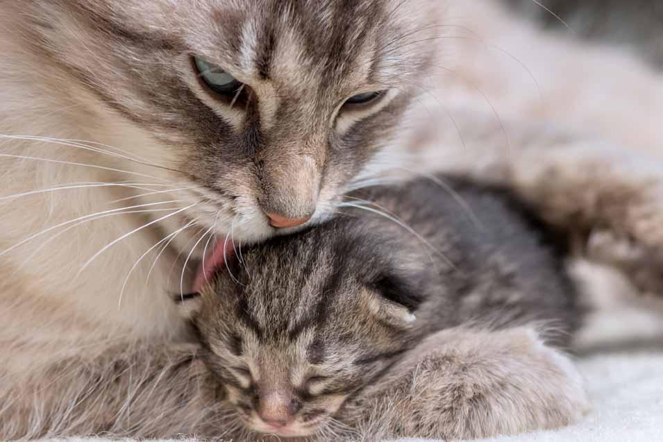 birth of kittens