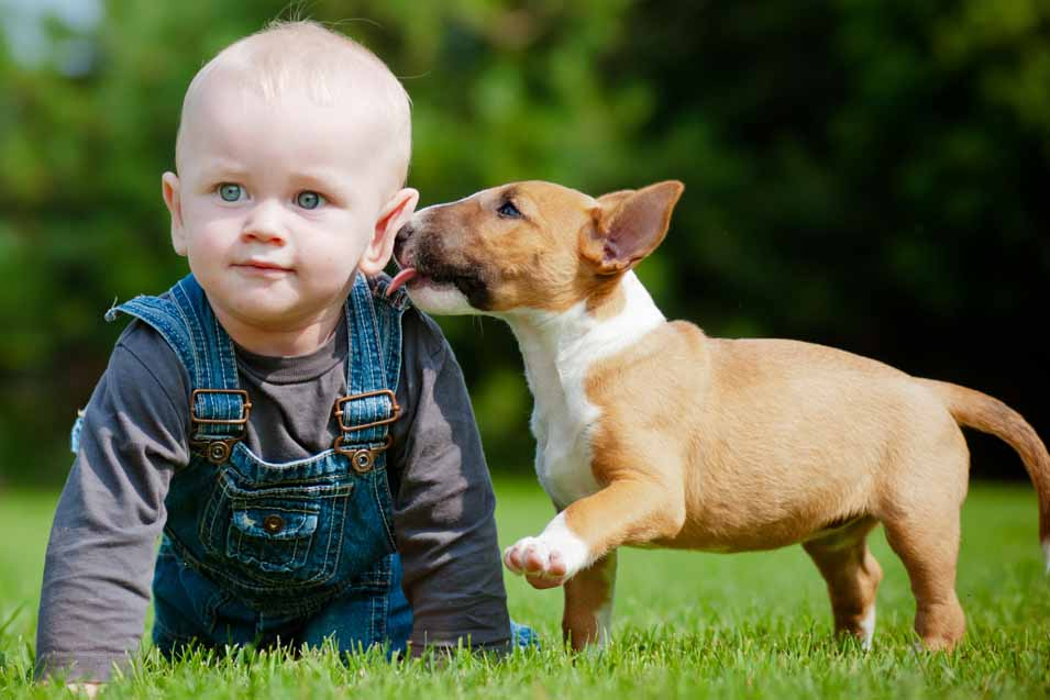 Picture of a boy and a puppy in backyard