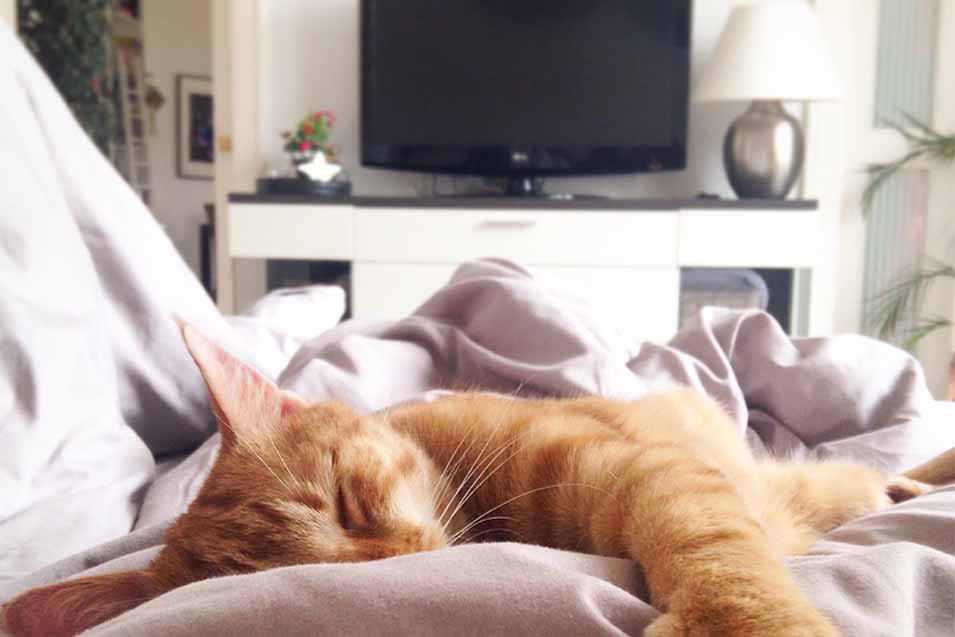 should cats watch tv