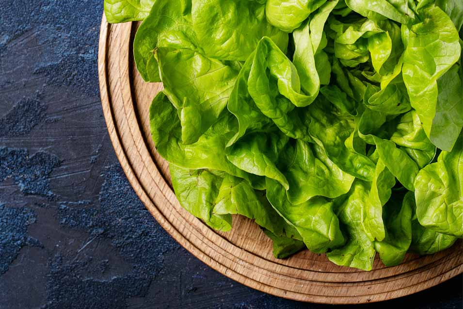 Can lettuce be dangerous for cats