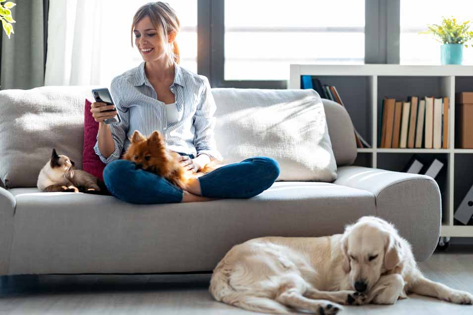 How to Reduce Pet Allergens