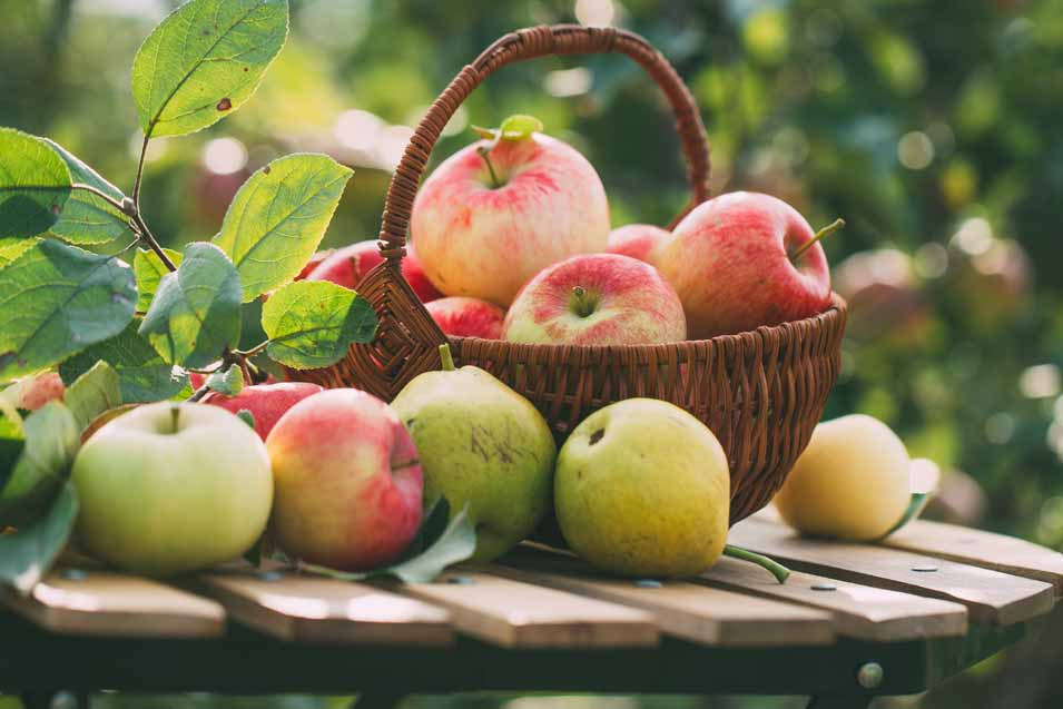 The risks of giving your dog apple cores